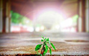 Semeando a semente do Evangelho – Jornal Árvore da Vida