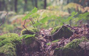 Ter um lugar para viver – Jornal Árvore da Vida